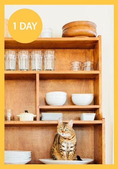 [1day] 뜻밖의 집사 : 고양이 그릇