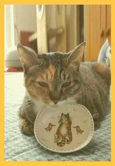 고양이섬네일.jpg